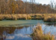 Marsh in Sheboygan County